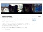 Hundlotsen Hunddagis i Enköping | Start