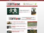 Notizie di Carini, Cronaca di Carini - Il Carinese Web Magazine