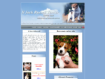 Jack Russell Terrier Danila Jack