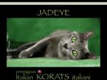 Allevamento Gatti Korat