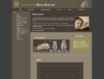 Kongensgaard British Shorthair - kat killing killinger billeder race racekat stamtavle brite briter.