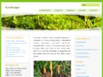 Korditseps - Hiina loodusravi traditsiooniline meditsiin | www. korditseps. ee | Korditseps OÜ |