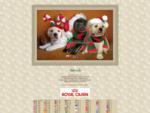 LABRADOR RETRIEVER - Szczenięce Marzenia - Hodowla Labrador Retrieverów