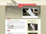 Papegaaien kwekerij van allerlei parkiet en papegaai soorten