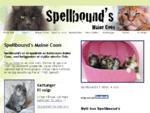 Spellbound's Maine Coon katter - maine Coon oppdrett, maine coon kattunger til salgs