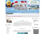 питомник собак породы Вест Хайленд Уайт Терьеров и Ризеншнауцеров МЕЧТА НАТАЛИ