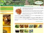Azienda Agricola Melissa Natura di Gaetano Lonetti, produzione fichi origano olio di oliva e vino.