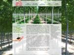 Azienda coltivazioni pioppo pordenone