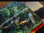 Web Agency Web Design MS CREATIVE STUDIO siti internet a Verona Lago di Garda web ...