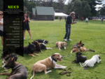 NEK9 | Professional Dog Training Services | Specialising in Basic to Advanced Obedience Behavi