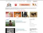 Интернет-приют «Обрету дом» бездомные животные в добрые руки Екатеринбург