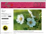 Etusivu - Kukkakauppa ja hautaustoimisto Savonlinnassa - Päivärannanruusu