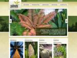 PALMETO PALMAS Y PLANTAS EXOTICAS | Palmeras | Cicadáceas | Plantas desérticas | Plantas suculen