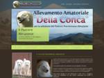 Pastore maremmano abruzzese | Allevamento Della Conca - Home