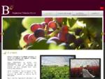 Achat Pieds et plants de vignes à Bordeaux en Gironde - Pépinière viticole Bérot