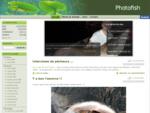 Photofish | La pêche du silure au coup !