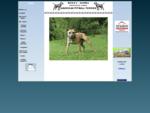 American PitBull Terrier chovatelská stanice BRIXA´S - KENNEL pitbull pitbul pittbul pittbull stenat