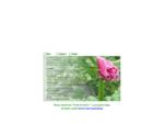 Gospodarstwo Ogrodnicze Musiał Piotr - produkcja kwiatów ciętych Anemone