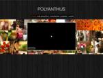 Polyanthus | Home