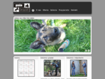 Szkoła dla psów Psia Banda - szkolenie psów w grupach, zajęcia indywidualne, prywatne konsultacje