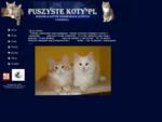 Koty norweskie leśne i ragdoll, kocięta norweski leśne, hodowla Puszyste Koty.