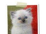 allevamento gatti ragdoll DeepBluEyes