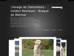 Elevage de Dalmatiens - Golden Retriever - Braque de Weimar - Bienvenue sur notre Site consacreacu