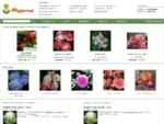 СК Подворье - Садовый центр и интернет-магазин - Оптовые продажи посадочного материала - В нашем и