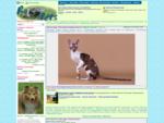 Ru-Pets - Все про домашних питомцев. Выставки собак и кошек. Клубы, питомники и ветеринары. Поку
