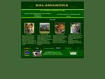 Salamandra Tierseite
