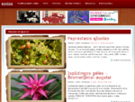 Sodas | Daržas | Sodas ir daržas | Sodo priežiūra