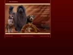 SOS Kot i Pies - wyprowadzanie, hotel, opieka, szkolenie