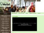 Stichting Melief, opvang voor dieren in nood