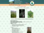 VÁNOČNÍ STROMKY a Balicí síť, prodej vánočních stromků