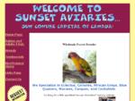 Wholesale Parrot Breeders