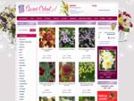 Świat Cebul. pl - tulipany | lilie | cebulki kwiatowe