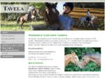 Tavela - ratsastuskoulu, ratsastusvalmennus, vammaisratsastus, Golf Range - Kangasala, Tampere,