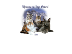 (N)Tojo Polaris Maine Coon