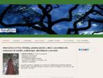 Arboricoltura ornamentale in tree climbing - Arboricoltura in tree climbing, potature abbattimenti, ...