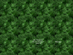 Vivai Gloter - realizzazione giardini parchi potatura piante abbattimento alberi manutenzione ...
