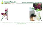 Vivai Porcellato Realizzazione giardini e vendita all ingrosso piante da esterno. piante ...