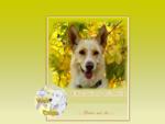 Well Dogs - Centro di educazione cinofila e addestramento cane cani - Milano.