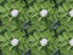 Zape trade prodaja vrtnega pohištva | Hartman | Paraflex